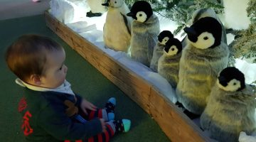 Places to visit Santa in and around Hampshire