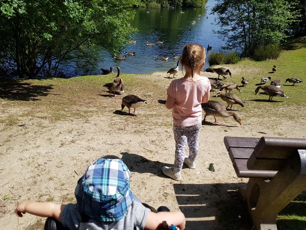 Wellington Country Park - Feeding the ducks
