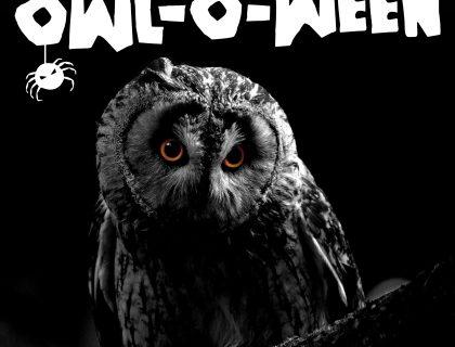 Hawk Conservancy Owl O Ween
