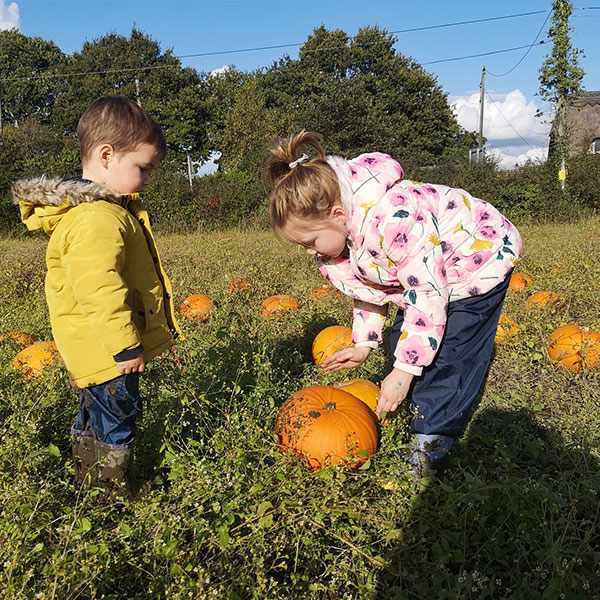 Pumpkin-Picking-Sunnyfields-Farm